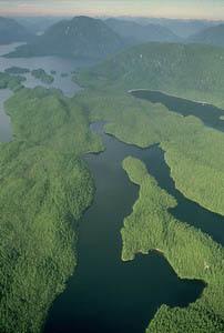 great-bear-rainforest-arial-photo.jpg
