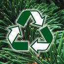 recycling_fenyo.jpg