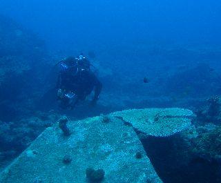 Bubu keresi a témát a sziklák között