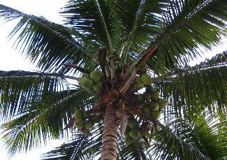 pálmafák tövében