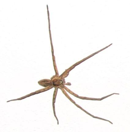 pók a teraszon