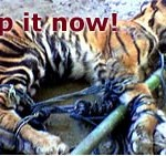 levadászott kistgiris (WWF kampány)